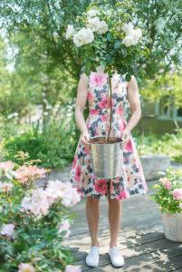 Plantez des rosiers au printemps et profitez plus tard