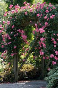 Rozenboog voor romantiek in de tuin